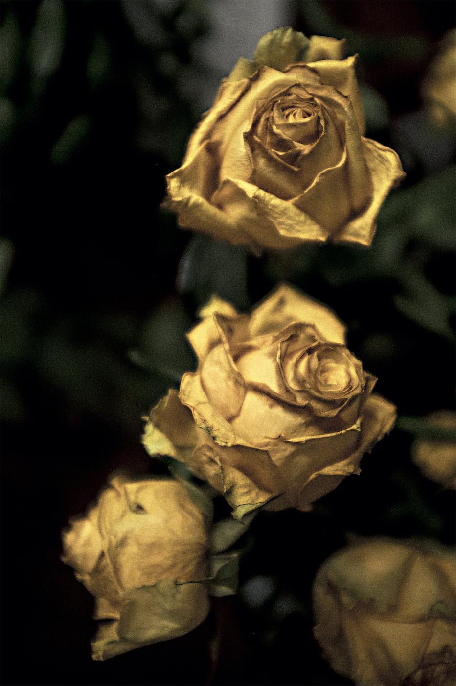 """""""Roses"""" by Phil Hossack"""